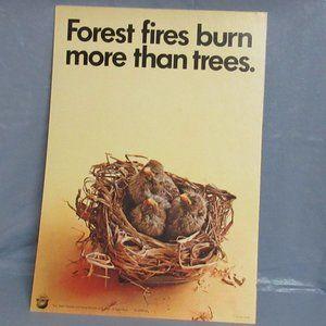 Vtg 1970 Forest Service Smokey Bear Poster Birds